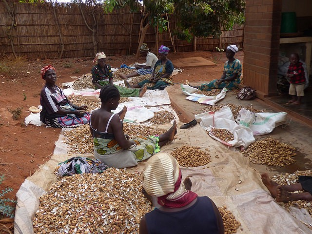 Farmers shelling groundnuts_ Credit Linvell Chirwa